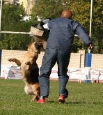 peluqueria canina, en los barrios, campo de gibraltar, cadiz, centro canino, guarderia de perro
