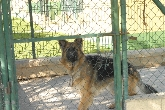 guarderia canina en cadiz, residencia canina, residencia perro,
