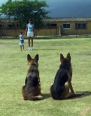kennels, hotel, gato, cadiz, campo de gibraltar, obediencia, conducta, ataque, pienso, residencia