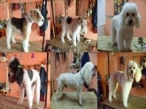 peluqueria para perro los barrios, sotogrande, guarderia canina en campo de gibraltar