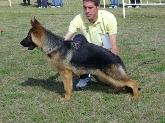 agility, algeciras, cadiz, trabajo, defensa, ataque, criadero, residencia de perro, sotogrande