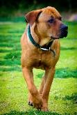 Entreno, entrenamiento perros, entrenamiento canino, preparacion canina, prepracion perros