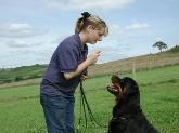 Adiestramiento, adiestrar perros, centro canino, el adiestrador de perros