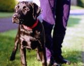 Cuidados, cuidadores de perros, cuidador, cuidados intensivos