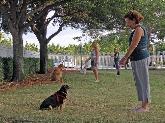Entrenadores personales, entrenadores para perros, diferentes estilos.