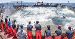 Tarifa: Tarifa, Barbate, Conil y Zahara festejan en mayo la llegada del atún rojo