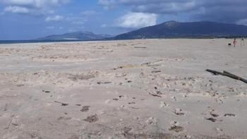 Tarifa: Denuncian nuevos actos vandálicos para practicar kitesurf en un paraje natural de Tarifa
