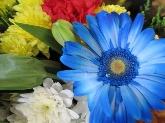 mayorista de rosas en madrid, mayorista ramos de flores madrid