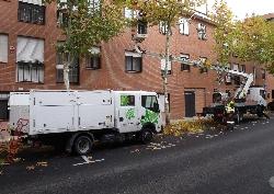 El Ayuntamiento de San Sebastián de los Reyes iniciará la poda del arbolado urbano a partir del próximo 1 de noviembre