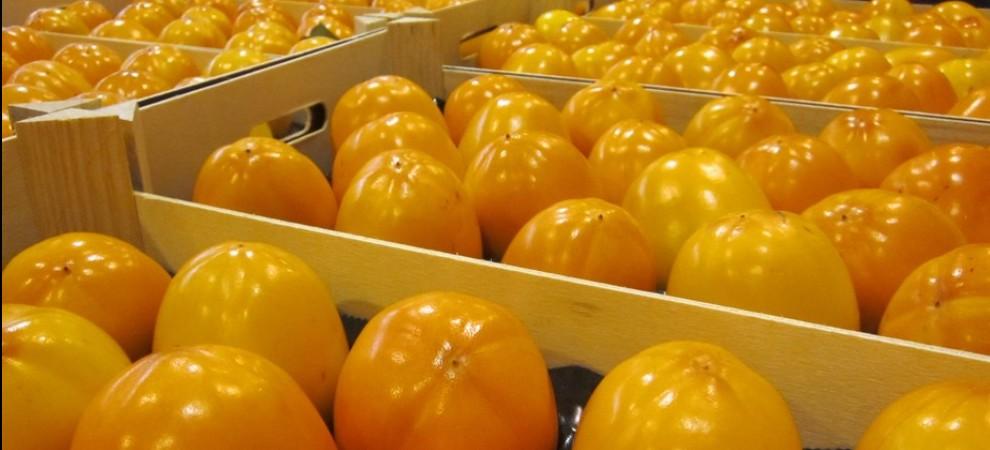 exportación de fruta en Valencia, exportador de fruta, exportador de fruta con hueso