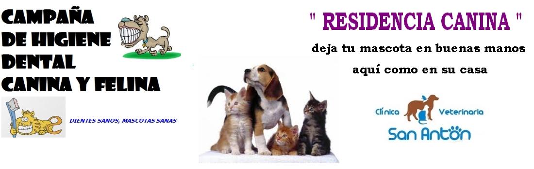 tienda de mascotas, Clínica veterinaria, CASTRACIÓN  FELINA