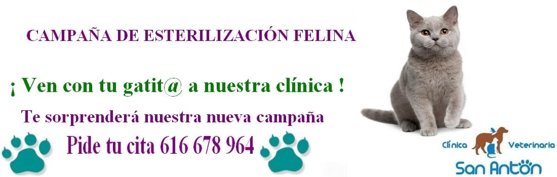 Guardería canina en Cuenca,  Peluquería Canina