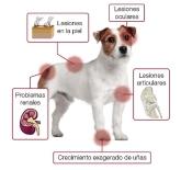 Cínica veterinaria San Antón en Cuenca, CAMPAÑA CONTROL LEIShMANIA