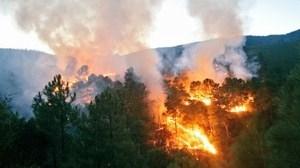 La prevención de incendios forestales, más efectiva gracias a un modelo científico creado en la UEx.