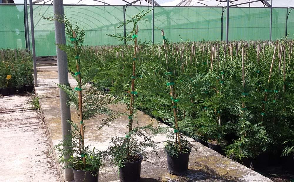 producción de plantas ornamentales badajoz
