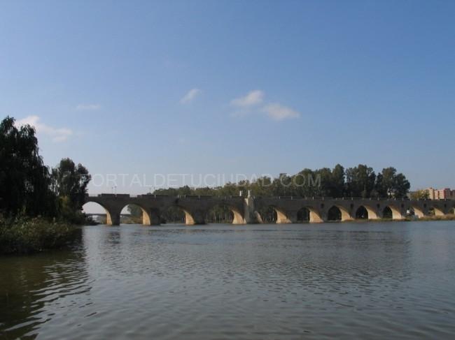 Puente de palmas