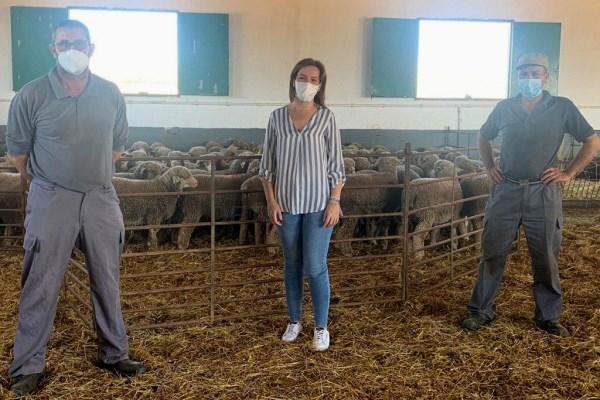 La Diputación de Cáceres adjudica 180 ejemplares de la raza Merino Precoz de su finca El Cuartillo