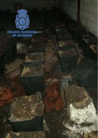 Detenidos dos jóvenes por la plantación de marihuana incendiada en unas naves del Nevero en Badajoz