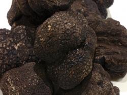 Un estudio pretende distinguir calidades de la trufa negra turolense
