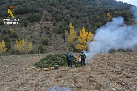 CUATRO AñOS DE PRISIóN Y 1,5 MILLONES DE MULTA A LOS DUEñOS DE LA MAYOR PLANTACIóN DE CANNABIS DE ARAGóN