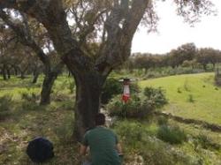 Detectados varios focos de virus del Nilo occidental en Extremadura.