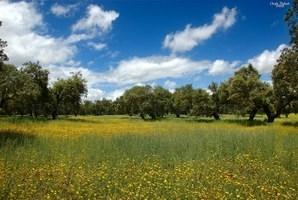 El proyecto europeo AGFORWARD llevado a cabo en la UEx pretende promocionar prácticas agroforestales que contribuyan al desarrollo rural en Europa.