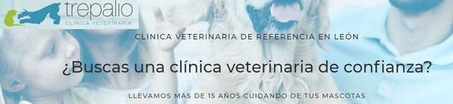 Clínica veterinaria Trepalio de Trobajo del Camino