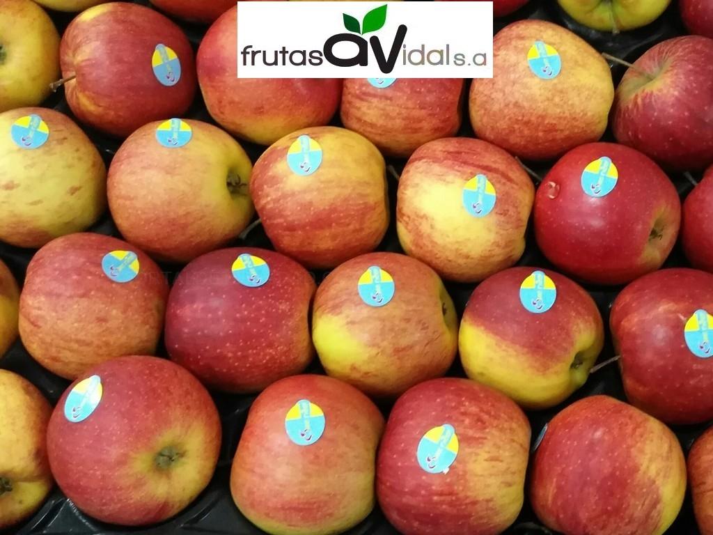 Frutas Vidal S.A