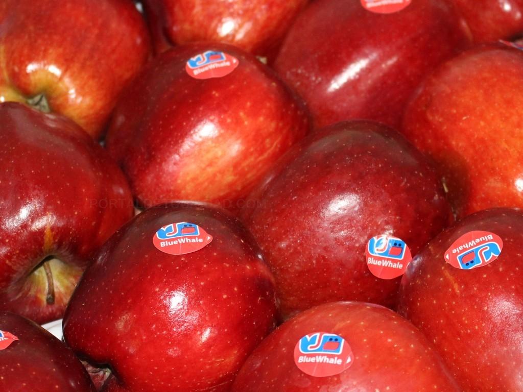 Frutas Vidal S.A.
