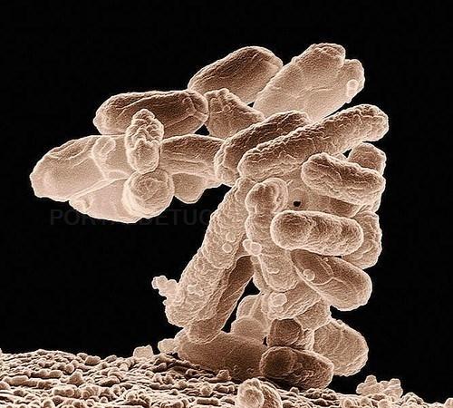 Un modelo anticipa el comportamiento de la principal bacteria causante de gastroenteritis