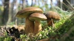 Los hongos pueden ser utilizados como biomonitores para la evaluación de presencia radiactiva en el entorno-