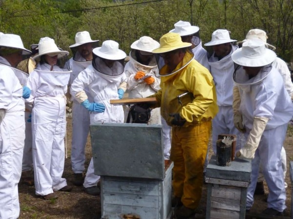 El DOE publica la orden de convocatoria de ayudas para mejorar las condiciones de comercialización de los productos de la apicultura.