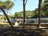 playa con pinos, Bares y cafeterías