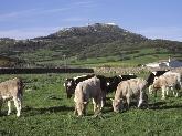compra de carne en Menorca, Distribución de alimentos