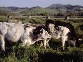 distribuidor de carne en Menorca