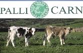 Terneros criados con alimentación 100% vegetal Menorca