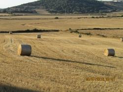Fogaiba convoca ayudas para diversificar las rentas de los agricultores de las Islas Baleares