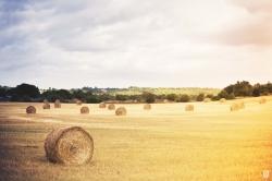 Más de tres millones en el mantenimiento del paisaje agrario