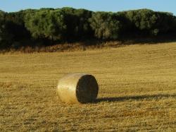 El Parlament aprueba una nueva Ley Agraria, más agrícola y menos urbanística