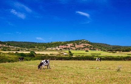 ¡Larga vida al campo de Menorca!