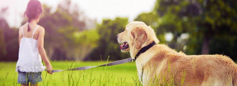 Educa-dog adiestrar mi perro, adiestrar mi perro en valencia
