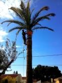 Poda y tala de alto riesgo en Valencia, tala de arboles grandes y destoconado en l'Eliana