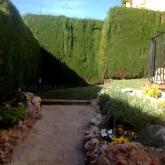 Plantacion de Palmeras de gran tamaño, resiembra de cesped y limpieza de chalets en Villamarchant