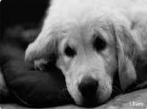 Cirugia para perros y cirugia para gatos en Betera,  Acupuntura para mascotas en Valencia