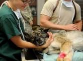 Veterinaria en Betera,  urgencias veterinarias