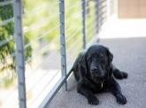 Cirugia canina y felina en Camp de Turia,   veterinarias  en Camp de Turia