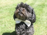 Educadog adiestramiento canino en valencia, educadog adiestrador de perros
