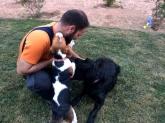 enseñar a mi perro a hacer caso, perro obediente en mi boda
