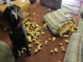 adiestramiento canino para niños Educadog, obediencia canina en L'Eliana