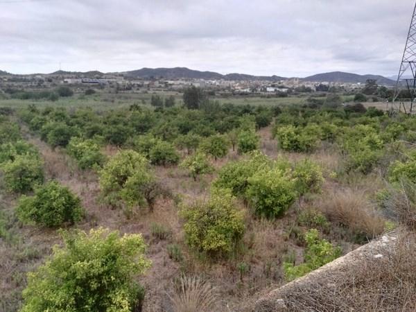 EL AYUNTAMIENTO DE RIBARROJA FORMARá AGRICULTORES LOCALES EN PODA Y PRODUCCIóN ECOLóGICA